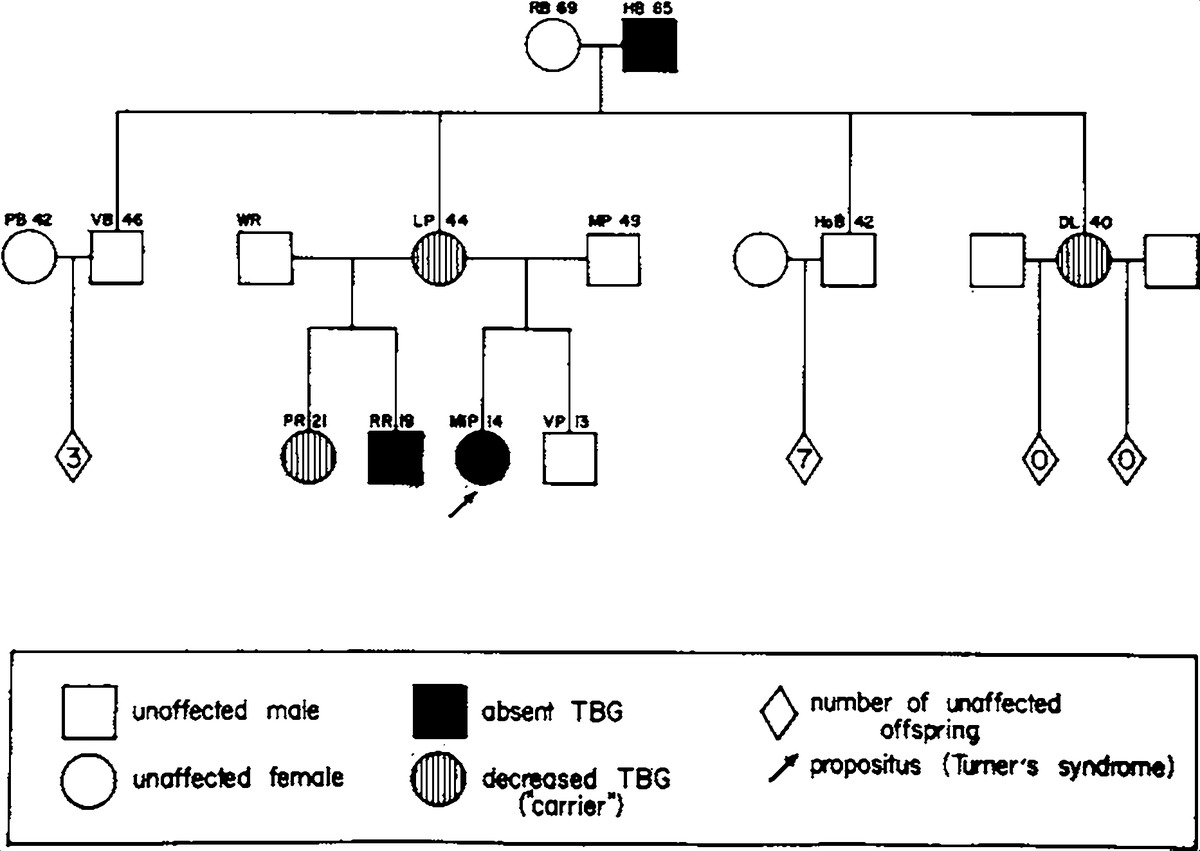 Familial thyroxine binding globulin deficiency in a patient with figure 2 pedigree of the family p with x chromosome linked tbg deficiency initials and ages are given above each symbol biocorpaavc Choice Image