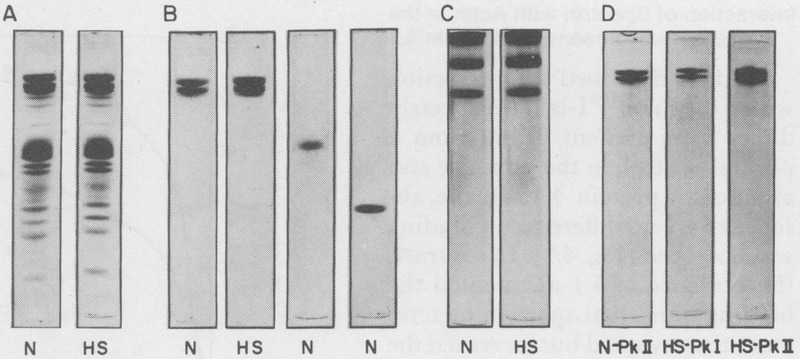 A Genetic Defect in the Binding of Protein 4 1 to Spectrin in a