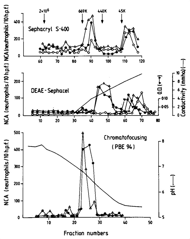 Exercise-Induced Late Asthmatic Reactions with Neutrophil ... on
