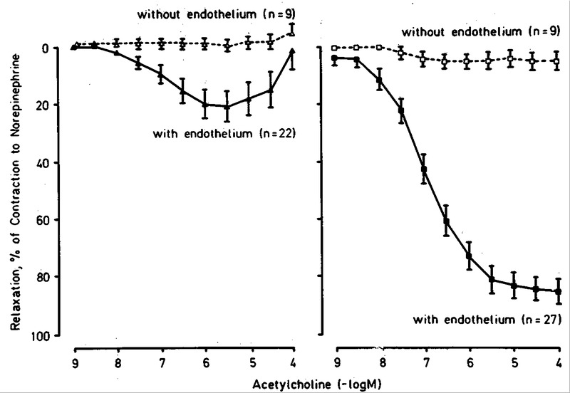 Difference between Endothelium-Dependent Relaxation in