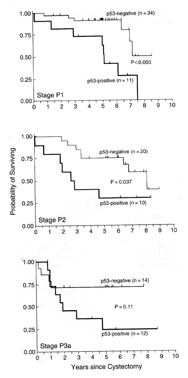 Accumulation of Nuclear p53 and Tumor Progression in Bladder