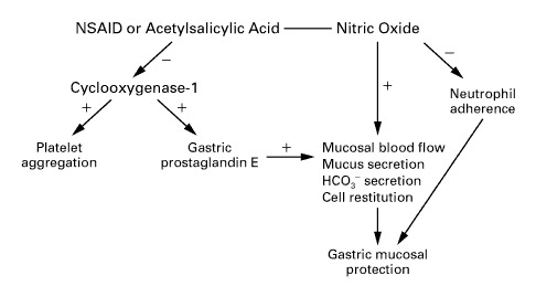 postulated mechanism by which nitric oxide–releasing nsaids maintain the  ability to protect the gastroduodenal mucosa while suppressing the level of