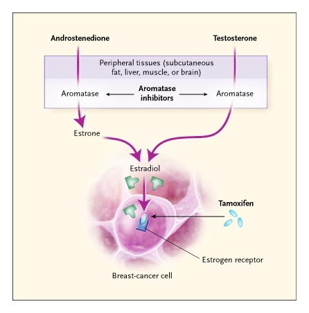 Aromatase Inhibitors In Breast Cancer Nejm