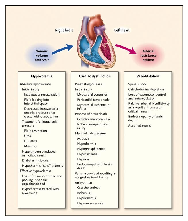 Care Of The Potential Organ Donor Nejm