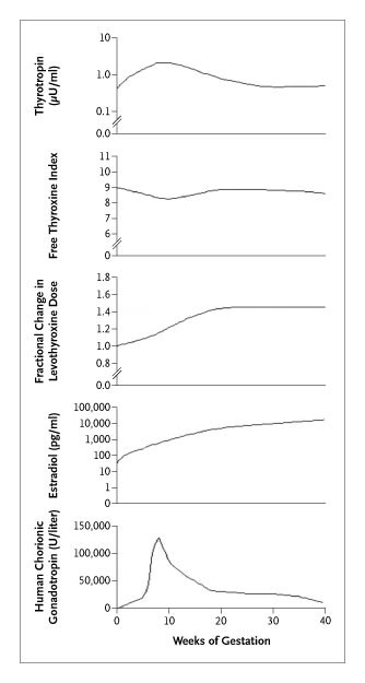 Timing and Magnitude of Increases in Levothyroxine