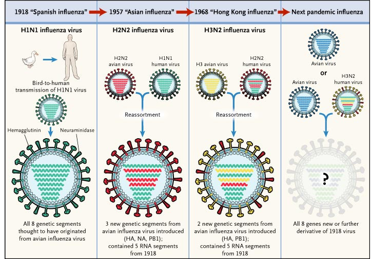The Origins Of Pandemic Influenza Lessons From The 1918 Virus Nejm