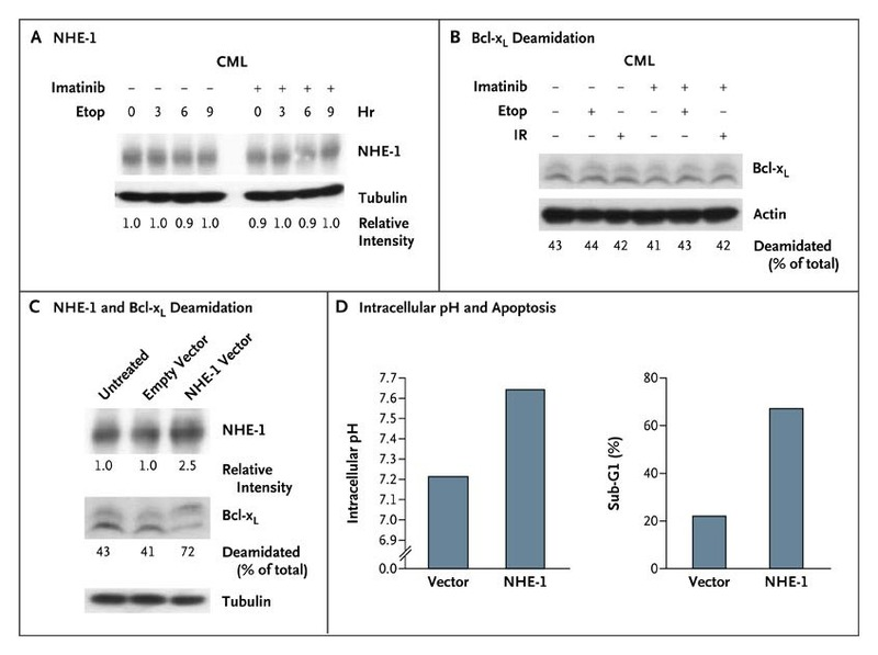 Inhibition of the Bcl-xL Deamidation Pathway in