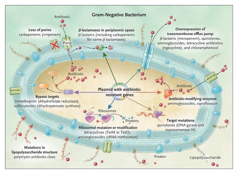 Hospital acquired infections due to gram negative bacteria nejm mechanisms of resistance in gram negative bacteria and the antibiotics affected ccuart Images