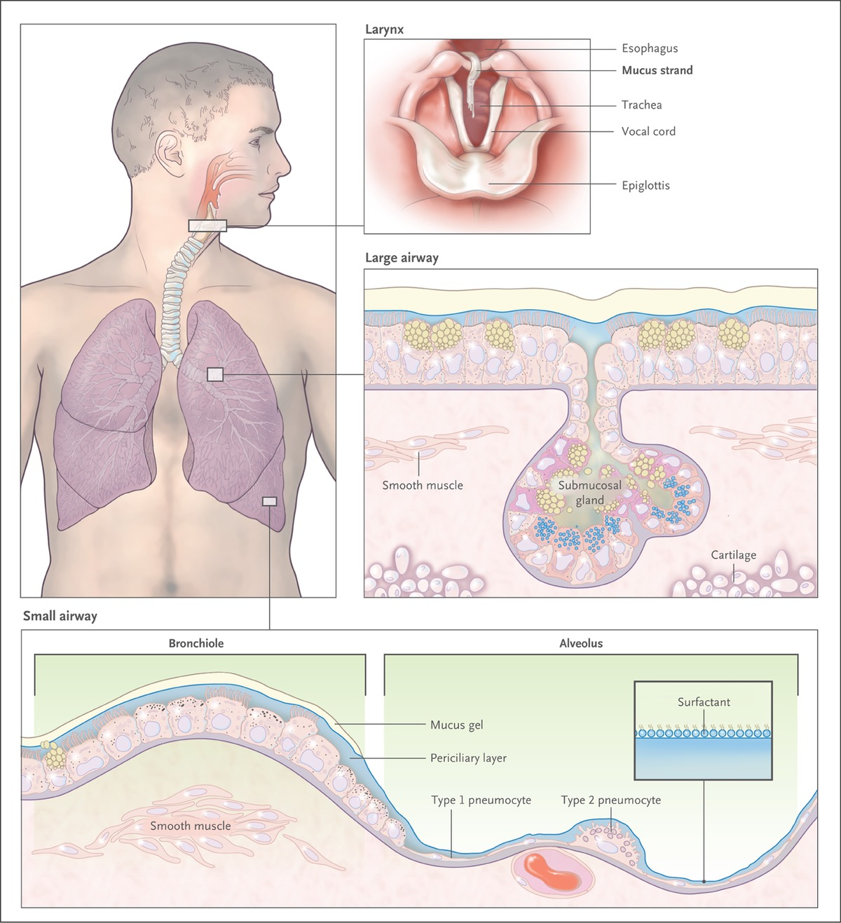 how to stop mucus production in throat