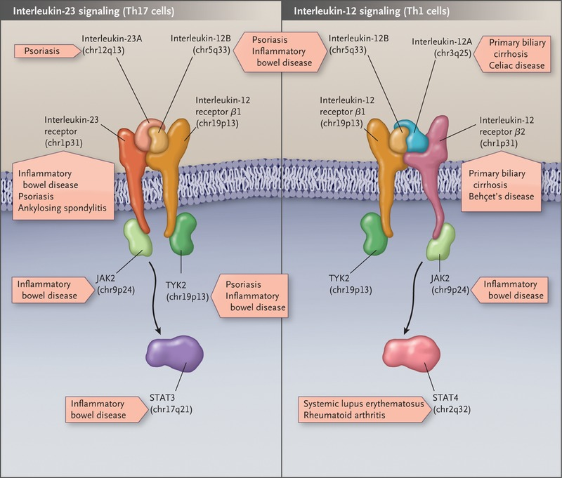 A Genomic Approach to Human Autoimmune Diseases (Annual Review of Immunology Book 28)