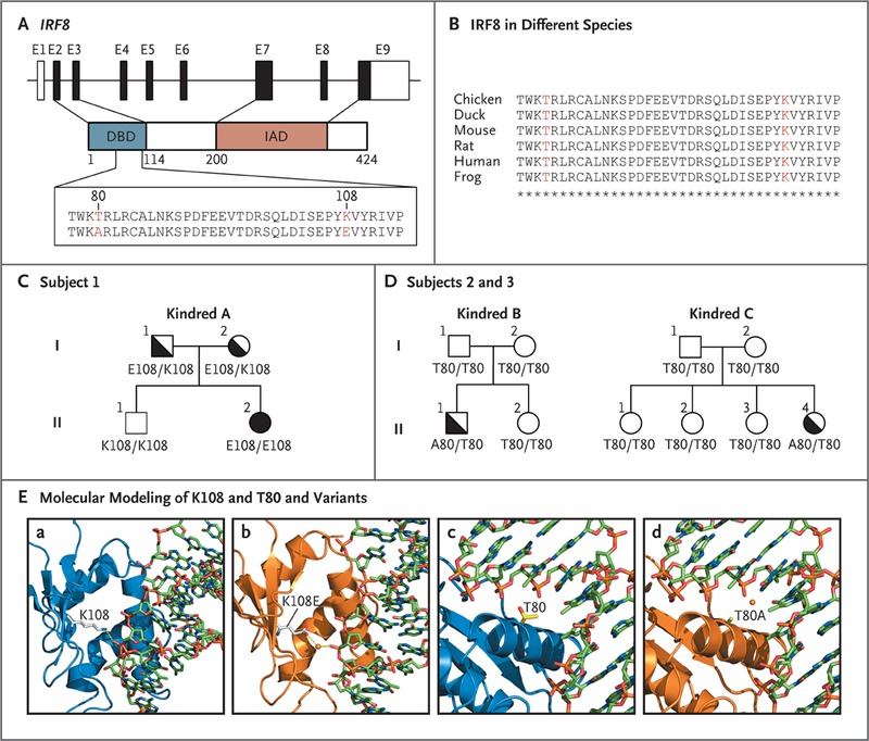 IRF8 Mutations and Human Dendritic-Cell Immunodeficiency | NEJM