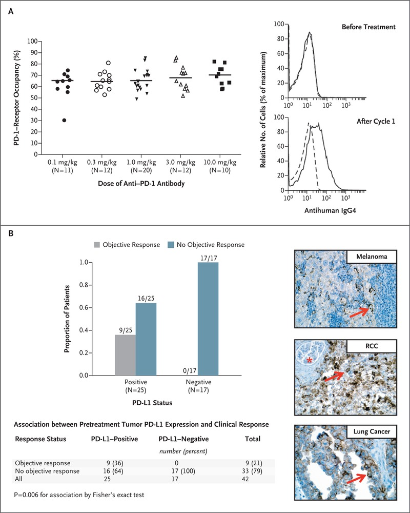 Safety, Activity, and Immune Correlates of Anti–PD-1 Antibody in