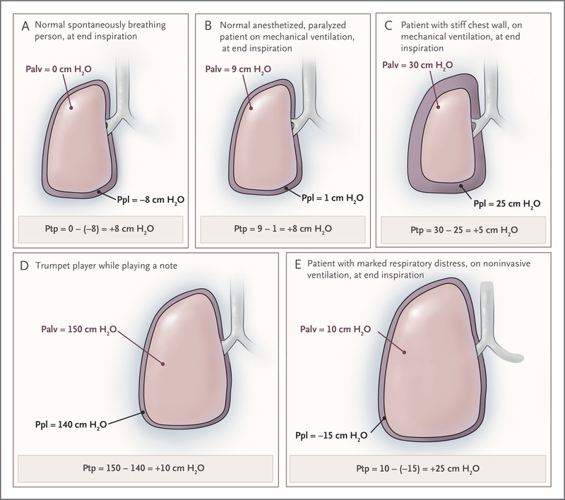 pressures in the lung