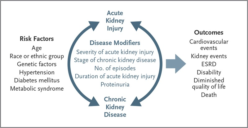 Acute Kidney Injury And Chronic Kidney Disease As Interconnected Syndromes Nejm