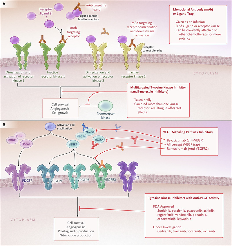 Cardiovascular Toxic Effects of Targeted Cancer Therapies   NEJM