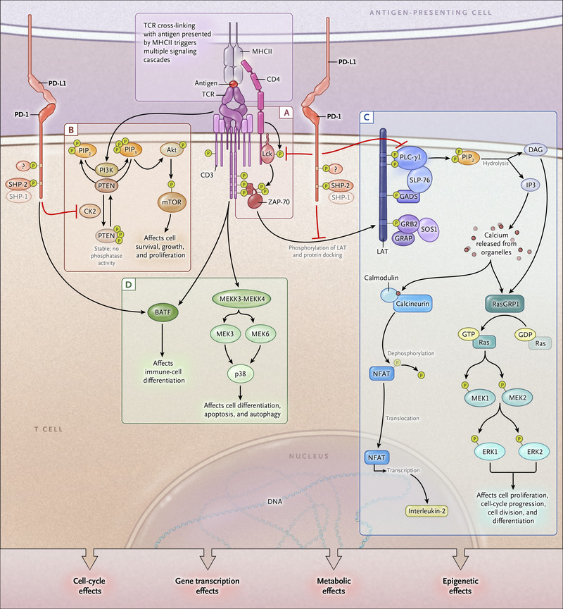 Molecular and Biochemical Aspects of the PD-1 Checkpoint