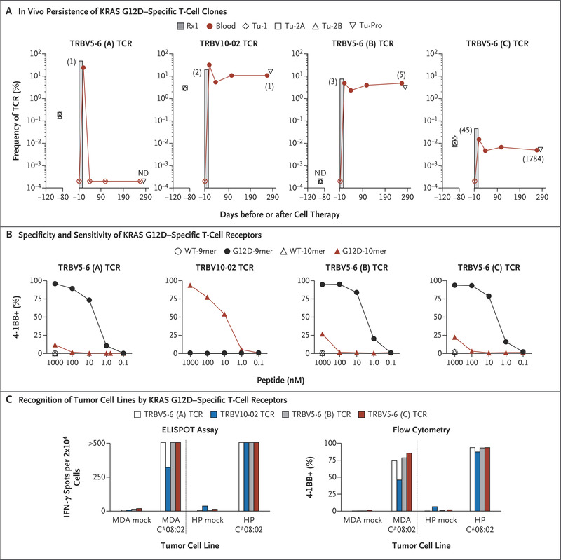 T Cell Transfer Therapy Targeting Mutant Kras In Cancer Nejm