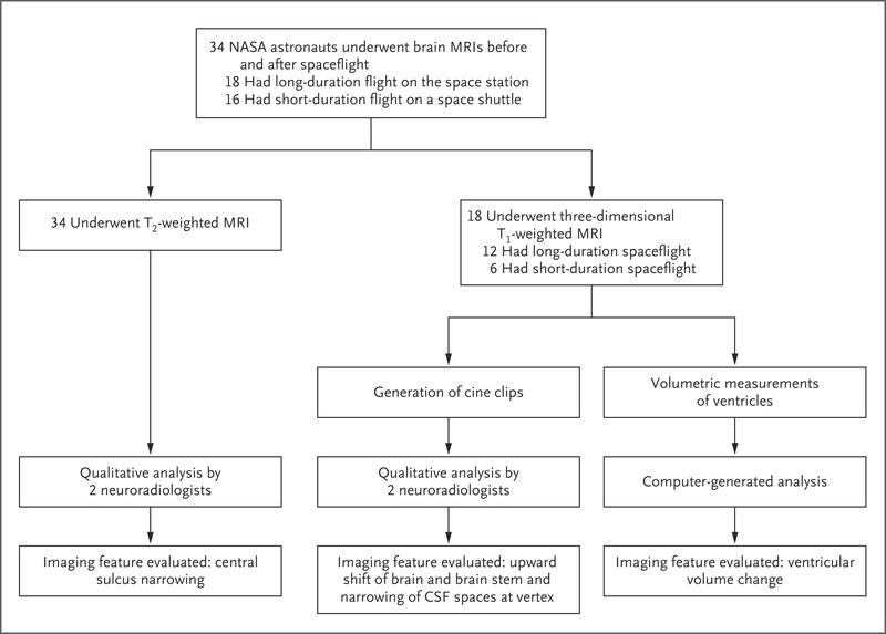 Effects of Spaceflight on Astronaut Brain Structure as Indicated on