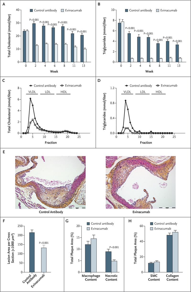 Genetic and Pharmacologic Inactivation of ANGPTL3 and