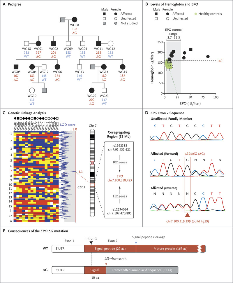 A Gain-of-Function Mutation in EPO in Familial