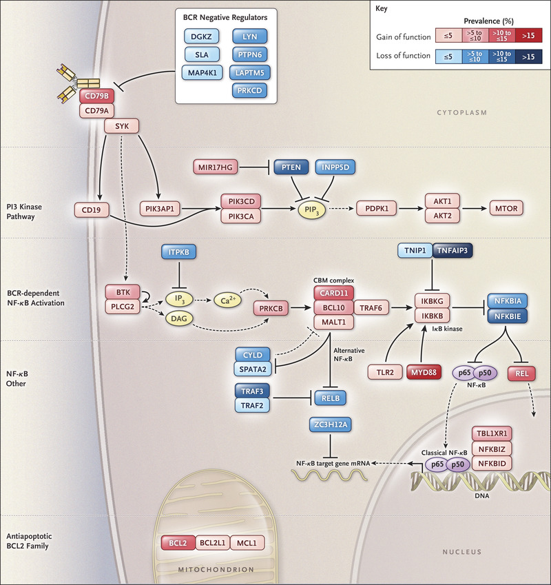 Genetics and Pathogenesis of Diffuse Large B-Cell Lymphoma
