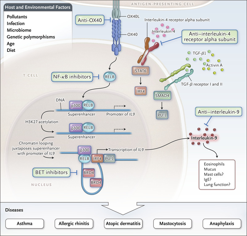 Epigenetic Control of Interleukin-9 in Asthma | NEJM