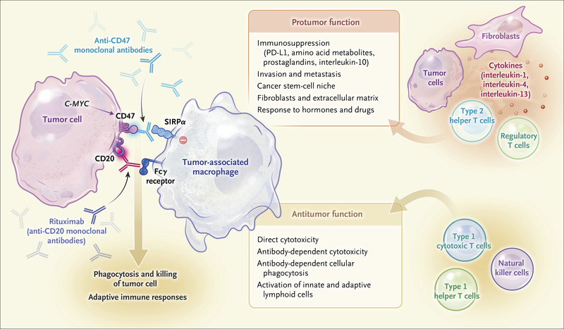 Macrophage Checkpoint Blockade in Cancer — Back to the Future