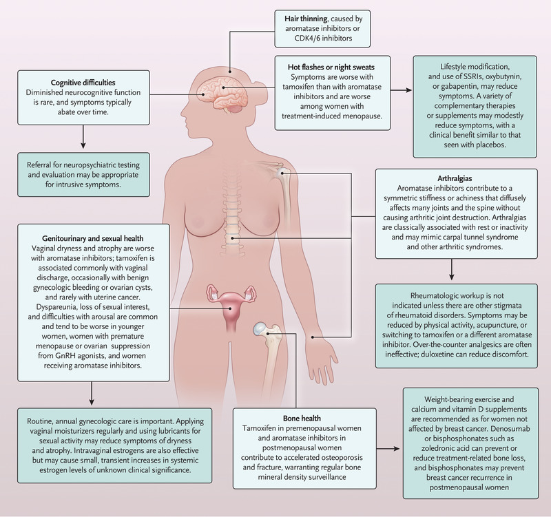 cancer drug hormone therapy